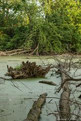 Rivside Park_2_2018.jpg (scorpio71gr) Tags: water riversidepark da5514 k3 pentax