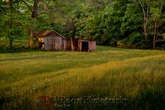 Lit By Days End (TAWilsonPhotography) Tags: farm rural appomattox virginia field barn