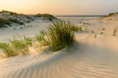Beach dreams (Ellen van den Doel) Tags: 2018 dunes natuur landscape hoek nature fotoclub outdoor summer kust zomer landschap duinen juni strand sunset zonsondergang kwade beach coast project field goedereede zuidholland nederland nl