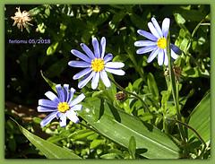 Torremolinos 19 flores.CR2 (ferlomu) Tags: ferlomu flor flower málaga torremolinos
