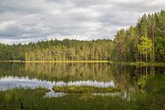 Makkarajärvi (Markus Heinonen Photography) Tags: makkarajärvi järvi lake hervanta tampere suomi finland europe maisema landscape waterscape reflection heijastus tyyni metsä forest retki retkeily luonto nature wood tree sky grass field suo mire mosse