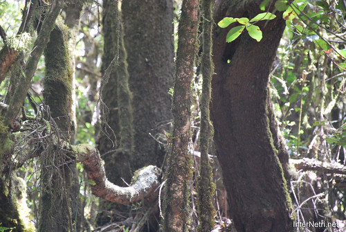 Національний парк Гарахонай, Гомера, Канарські острови  InterNetri  0702