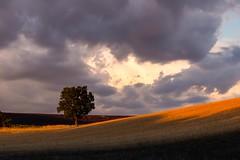 Un soir d'été en Provence... (Be So) Tags: été soir orage nuages nature blé provence sud coliine
