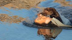 Fresh water Catch (kitwilliams91) Tags: spaniel dog canine gundog retrieving dummy water sunlight donnifordbeach river