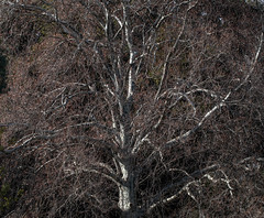 Winter has its charms (dmunro100) Tags: adelaide botanics winter bare cold southaustralia