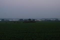Tarporley 070718 - DSC_0854 (Leslie Platt) Tags: exposureadjusted straightened cropped lookingw tarporley cheshirewestchester cattlemaizecrop dawn lowmist