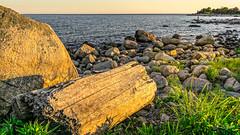 Sea Soaked Log at Sunset (Alan Charles) Tags: ct connecticutshore hammonassetbeachstatepark hammonassetstateparkmeigspoint meigspoint seascape beach ocean rockyshoreshore sea shore