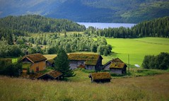 Green life (annazelei) Tags: norway green village outdoor natural nature naturaleza canon summer travel woods fields rustic country roof forest wood greenwood wooden nord north nordic boreal tree field sky grass building road chalet mountain