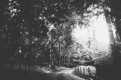   (chmeechan1) Tags: landscape landscapes bw monochrome road rural countryside light dark contrast