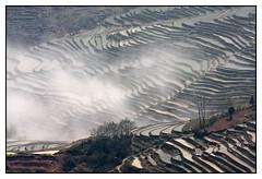 Les sculpteurs de montagnes -  Mountain sculptors (diaph76) Tags: extérieur paysage landscape chine china brume mist rizières paddyfields terrasses terraces yunnan graphisme cultures
