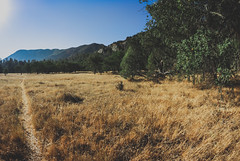 Los Padres National Forest (andrewkovalchuk) Tags: heat wilderness oak trees path hiking morning dry grass 16mm fisheye nikon d700