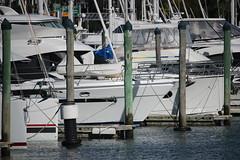 Marina (neil.bather) Tags: marina wharf boats yachts sea seascape cityscape auckland new zealand