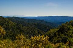 Castle Rock (rmstark3) Tags: castle rock state park california silicon valley san jose 35 hills trees nature fog