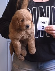 Lucy Lu Girl 2 pic 3 6-17