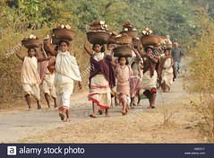 dongria-kondh-tribal-women-carrying-heavy-loads-on-their-way-to-the-A5ED1Y (Matriux2011) Tags: barefoot dirtysoles cracksoles indian nepali barefootextreme talonescurtidos piesrajados