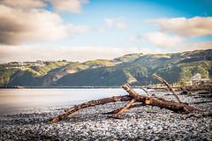 Petone Beach driftwood