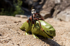 Traveling on a dewback (Ballou34) Tags: 2016 650d afol ballou34 canon eos eos650d flickr lego legographer legography minifigures photography rebelt4i stuckinplastic t4i toy toyphotography toys rebel stuck in plastic star wars starwars sw stormtrooper dewback travel sand rock