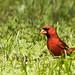 Backyard_Birds_7-1-18-4924