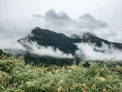 Springbrook plateau ([S u m m i t] s c a p e) Tags: springbrooknationalpark springbrookplateau cloud hiking mist trailrunning winter numinbah newsouthwales australia