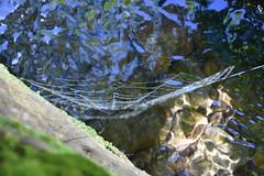 DSC_8708 (griecocathy) Tags: toile araignée eau mosaïque macro cailloux roche mousse algues reflet éclat bleu vert gris crème marron gouttelette ombre