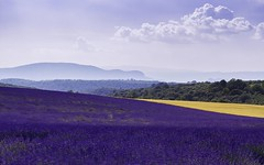 Layers Of Peace (R35) (Darblanc ( http://darblanc.com )) Tags: canoneos7d countryside hills mountains nature darblanc darblancphotography photography xavdarblanc xavdarblancphotography photo coloursshapesandmoods spring colour bokeh series stackedimages daytime artphoto abstract panorama clear clouds landscape lavender flowers france frenchalps provence alpesdehauteprovence valensole plateaudevalensole