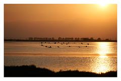 Spilled gold. (GlebLv) Tags: sony a6000 sel55210 deltere naturepark parcnatural deltaebro deltadelebre llacunadelatancada sunset lake nature espana spain tarragona