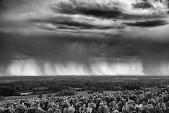 Under the rain (ZeGaby) Tags: blackandwhite clouds landscape naturephotography paysage pentax2470mm pentaxk1 rain vignes vignobles vineyards bisseuil grandest france fr