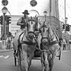 Salzburg impressions - Fiaker (rotraud_71) Tags: austria salzburg bw fiaker horses quadrat people summer