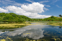 Bosherston Ponds (mikeplonk) Tags: pembrokeshire westwales wales stackpole stackpoleestate bosherston lilypads lakes ponds nature nikon d5100 18140mm kitlens polarisingfilter polarizingfilter cpl nationaltrust sky clouds reflections trees green yellow blue white water