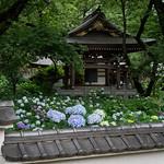 Myorakuji, Kawasaki's hydrangea temple thumbnail