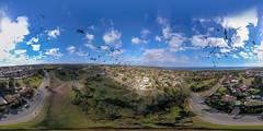 Flying with cockies (leemerchant) Tags: dji mavic hallet cove yellow tailed cockatoo equirectangular