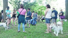 Yappy Hour popup Park June 2018 (Montgomery Parks, MNCPPC) Tags: band bethesda community dog dogpark dogs elmstreeturbanpark event family food montgomeryparks music popup popupparks urban urbanpark