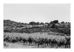 Paysage héraultais (DavidB1977) Tags: france film languedocroussillon hérault canon eos100 ilford hp5 monochrome nb bw fenêtre vigne