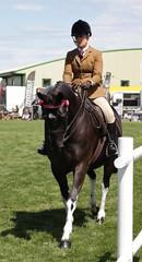 Riding Horse (Elrenia_Greenleaf) Tags: bay ridinghorse ridinghorseclass royalhighlandshow rhs rhs2018 royalhighlandshow2018 equestrian horsephotography horseshow ponies