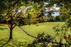 Water Race (Jocey K) Tags: monavale newzealand nikond750 christchurch autumn trees sky gardens shadows plants lawn