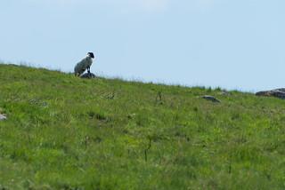 Dartmoor lookout K1__7011.jpg