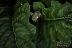 Awaken Me (donna.chiofolo (on and off)) Tags: nature plant garden mood atmosphere poetry composition movement grace rest awake details nikon