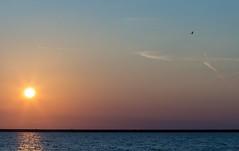 Light blue sunset (Marilely) Tags: brush pinsel fata morgana orange sun soft colors sunset lelystad nederland netherlands north sea niederlande water ocean movement bewegung wellen waves sonnenuntergang » übersetzungen   zonsondergang zonsondergangen oceaan ijsselmeer seascape