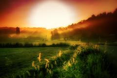 Early morning - Austria (Julie Greg) Tags: travel austria landscape colours sun grass building sunset tree sky mist