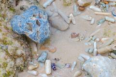 life in the tide pools (Santanu Sen) Tags: tidepool rockpool rockycoast sea seashore andamansea island neilisland andaman india wild wildlife nature
