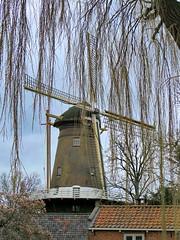 underneath the willowtree (Mattijsje) Tags: windmill windmolen de hoop hope loenen nederland netherlands holland city village tree trees boom bomen wilg willow