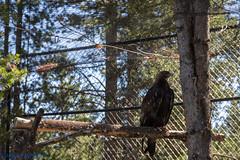 IMG_0980.jpg (Hogan W) Tags: westyellowstone montana unitedstates us