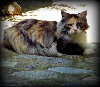 Le chat d'Eüs - Explore 18/06/2018