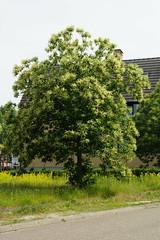Ik weet helaas niet wat voor een boom dit is. (limburgs_heksje) Tags: nederland netherlands niederlande limburg chateau neercanne castle schloss grens