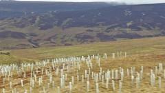 Deer affairs, Huntford England (Alta alatis patent) Tags: deer tree planting plastic field landscape england huntford vague