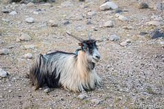 20180330-_DSC0264.jpg (drs.sarajevo) Tags: sarvestan ruraliran iran nomads farsprovince chamsatribe