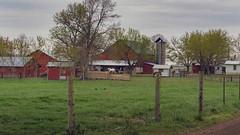 Farm Life (TuthFaree) Tags: amish rural agriculture farm horse wagon barn red tin child boy hff fencefriday fence tn ethridge chickens