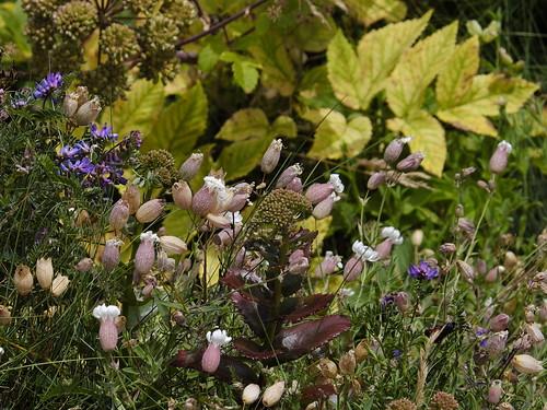 Costal flora