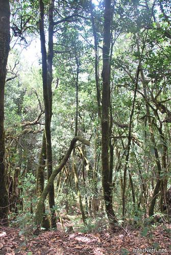 Національний парк Гарахонай, Гомера, Канарські острови  InterNetri  0722