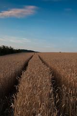 traces II (piri198) Tags: fuji fujifilm fujinon xe2s xf xf23mmf2rwr traces spuren lightroom lightroomcc himmel feld kornfeld cornfield clouds heaven ernte harvest landschaft landscape
